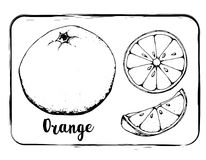 Dessin noir et blanc de main de croquis de fruit de croquis de fruit d'isolement Photos libres de droits