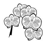 Dessin noir et blanc des fleurs d'orchidée Photos libres de droits