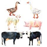 Dessin réglé d'animal de ferme dans l'aquarelle Vache, canard, chèvre, porc Photos libres de droits