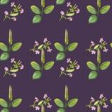 Dessin sans couture d'aquarelle de modèle tiré par la main des feuilles de vert de plantain et des fleurs roses sur le fond viole photos stock