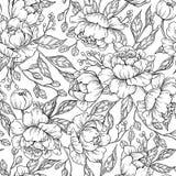Dessin sans couture de modèle de fleur de pivoine Le vecteur tiré par la main gravent illustration stock