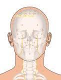 Dessinant avec le squelette, point ST8 Touwei, 3D Illustra d'acuponcture Photos libres de droits