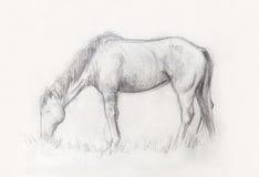 Dessinez le cheval de crayon sur le vieux papier, et la vieille structure de papier de vintage Photographie stock