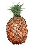 Dessins de style chinois, croquis, fleur d'ananas Illustration Stock