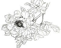 Dessins de style chinois, croquis, pivoine illustration stock