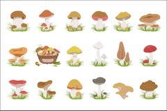 Dessins réalistes de champignons mangeables réglés illustration libre de droits