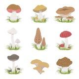 Dessins réalistes de différents champignons réglés illustration de vecteur