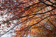 Dessus chauds d'arbre d'Autumn Foliage Image stock