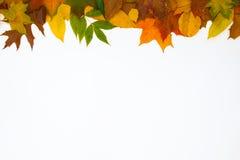 Dessus coloré de feuilles Photos stock