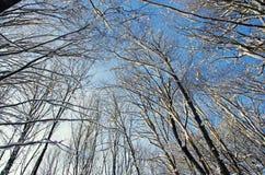 Dessus d'arbre d'hiver Image libre de droits