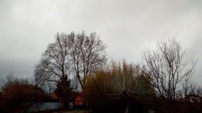 Dessus d'arbre en hiver Photos stock