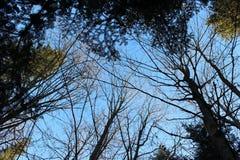 Dessus d'arbre rentrés le jour d'hiver ensoleillé Photographie stock libre de droits