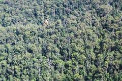 Dessus d'eucalyptus de forêt Photographie stock