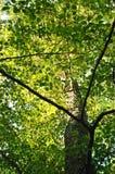 Dessus d'un arbre Photo libre de droits