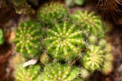 Dessus de cactus Image libre de droits