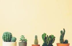 Dessus de cactus sur un fond jaune amorti Photos stock