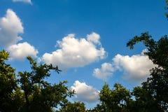 Dessus de haut arbre en parc, beau jour ensoleillé Images stock