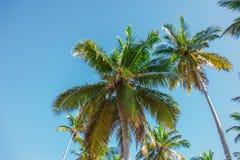 Dessus de hauts palmiers au soleil sur le fond de ciel images libres de droits