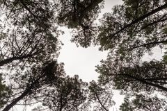 Dessus de l'automne d'or d'arbres photos stock