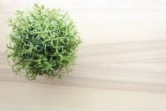 Dessus de table en bois avec la petite plante verte dans des pots Photo stock