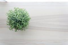 Dessus de table en bois avec la petite plante verte dans des pots sur la fenêtre Images libres de droits