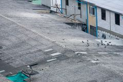 Dessus de toit d'entrepôt Le paquet de pigeons, les matériaux de construction et l'antenne parabolique de TV sont repérés autour  photographie stock