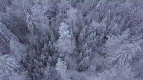 Dessus des arbres dans la neige banque de vidéos