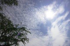 Dessus des arbres en ciel bleu avec nuageux diffus avec l'éclat du soleil images stock