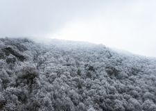 Dessus des montagnes couvertes de forêt couverte de neige de pin dans le brouillard Images stock