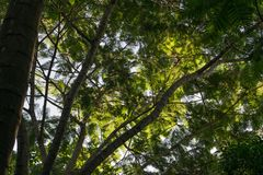 Dessus et ciel d'arbre Images libres de droits