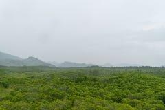 Dessus et ciel d'arbre Photographie stock