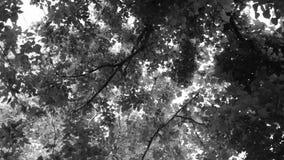 Dessus noirs et blancs d'arbre Images stock