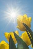 Destacado pelo sol Imagem de Stock