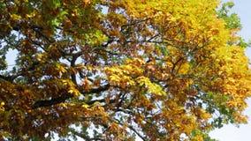 Destaques bonitos nas folhas vídeos de arquivo