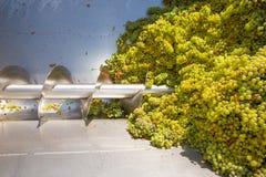 Destemmer del frantoio della cavaturaccioli di Chardonnay nella vinificazione immagini stock libere da diritti
