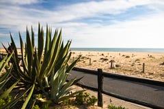 Destination de voyage de vacances d'été à la belle plage sablonneuse du Portugal du sud Photos stock