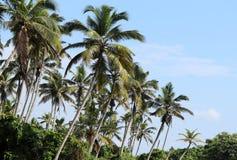Destinations naturelles du sud de visite de l'Inde photographie stock libre de droits