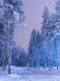 Destinations Scenic Ideas and Concepts. Amazing Tranquil Winter. Forest Scenery in Suomi Nordic Area Over the Polar Circle in Finland.Vertical Image Royalty Free Stock Photos