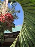 destinationsfrukt gömma i handflatan tropiska philippines Royaltyfri Foto