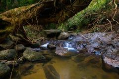 Destinazioni Rio Celeste di viaggio di Costa Rica Nature Background Travel Destinations Rio CelesteCosta Rica Nature Background fotografie stock