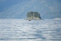 Destino del viaje - aventura de observación de la ballena Imagen de archivo libre de regalías