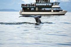 Destino del viaje - aventura de observación de la ballena Imágenes de archivo libres de regalías