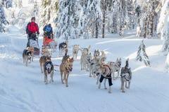 DESTNE, ЧЕХ - 23-ье января 2019: Гонки собаки стоковые изображения rf