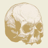 Destrezza della mano di un cranio umano Fotografia Stock