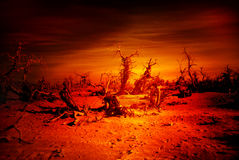 Destroy Forest / doomsday. Dead forest of judgment day royalty free stock photography