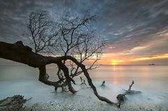 Destroy tree during beautiful scenery of sunset. Beautiful scenery of sunset at the sea stock photo