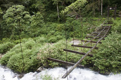 Destroyed bridge in a jungle Royalty Free Stock Photos