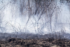 After destroyed by burning tropical forest Stock Image