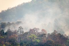 Destroyed by burning tropical forest Stock Images