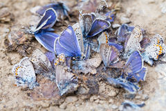 Destroyed butterfly family Royalty Free Stock Photos